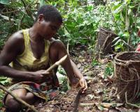 Mbendjele Woman Cracking Nuts