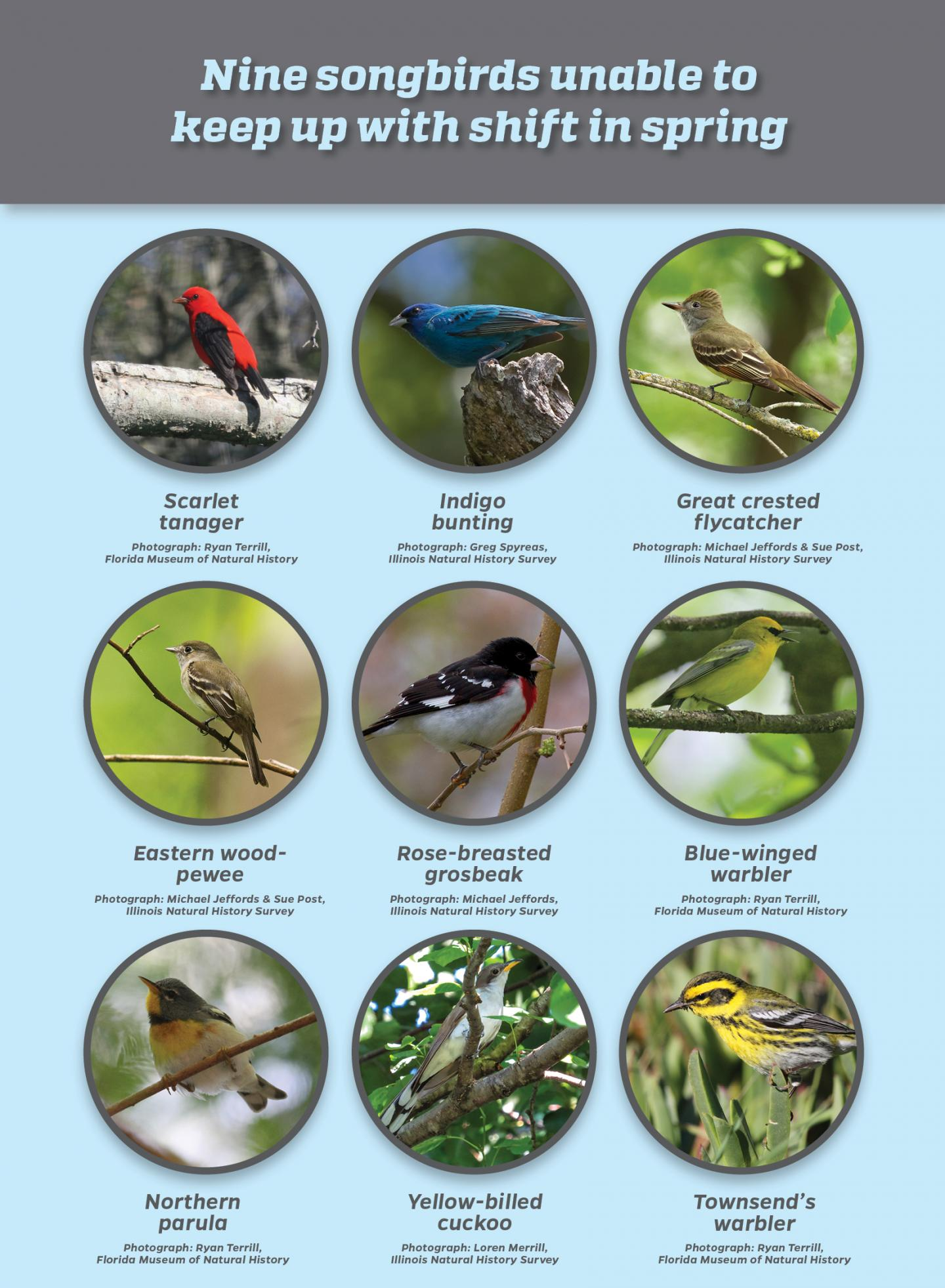 Nine Songbird Species Unable to Keep up With Shift in Spring