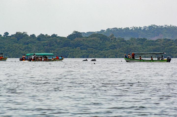 Dalia Barragan Delfines