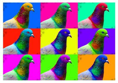 Pigeon Art
