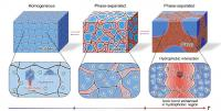 Molecular Structures and the Mechanisms
