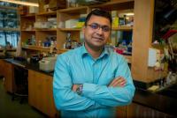 Prayag Murawala, Ph.D., Mount Desert Island Biological Laboratory