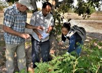 Underutilized perennial vegetable species growing in Cambodia