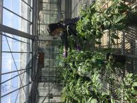 Cultivating a Core Tomato Microbiome