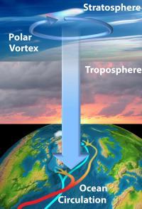 The Stratosphere Influences Sea Circulation