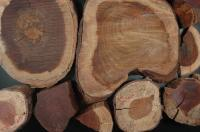 Pau-brasil Logs