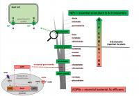 Evolution Converted Bacterial Arsenic Effluxers into Plant Nutrient Boron and Silicon Importers