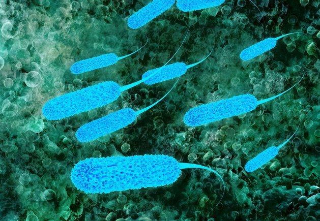 <I>Escherichia coli</I>