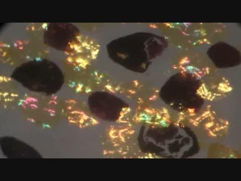 Squid Chromatophore Reflectance