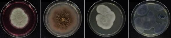 Antarctic Fungi