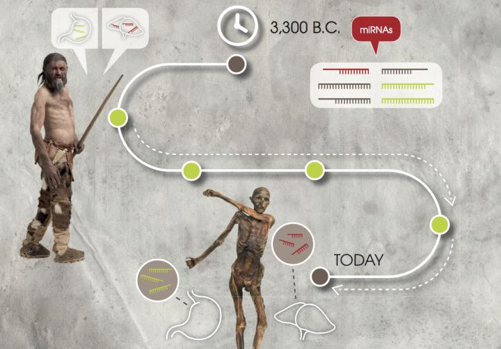 Oetzi the Iceman: Researchers Validate the Stability of Genetic Markers