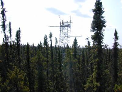 Tour-Bluets -- Flux Tower