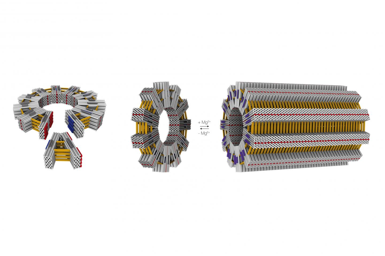 DNA Cylinder