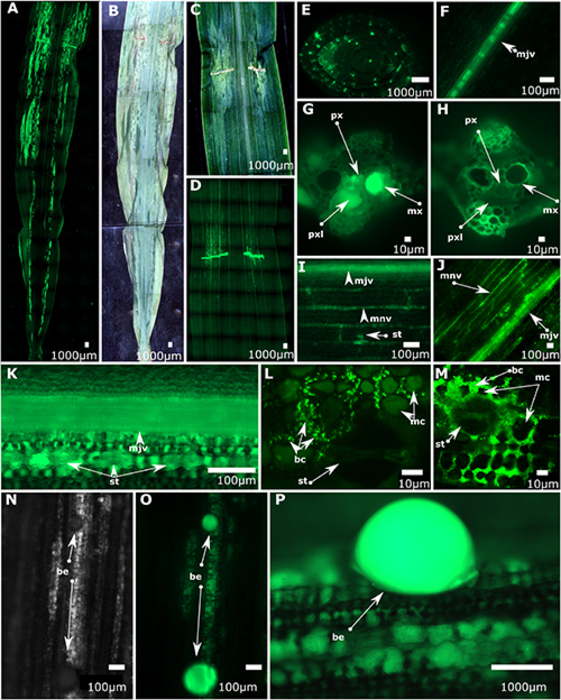 Bacterial colonization and movement