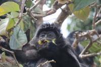 Monkey Feeding 2