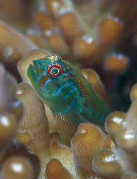 Mutualistic Fish (1 of 3)