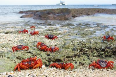Crabs in a Cove