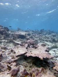 Section of Reef