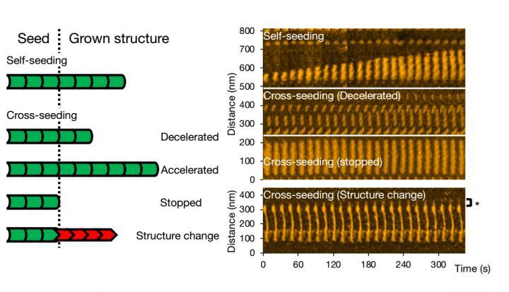 High-Speed Atomic Force Microscopy