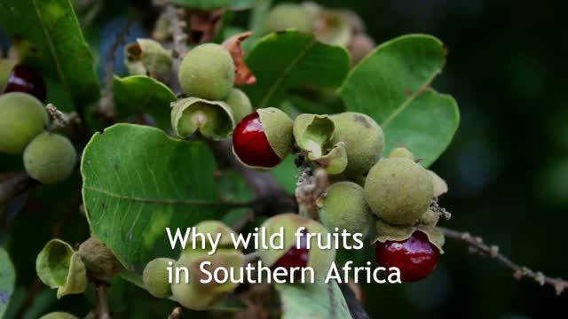 Why wild African fruits as food supplements?