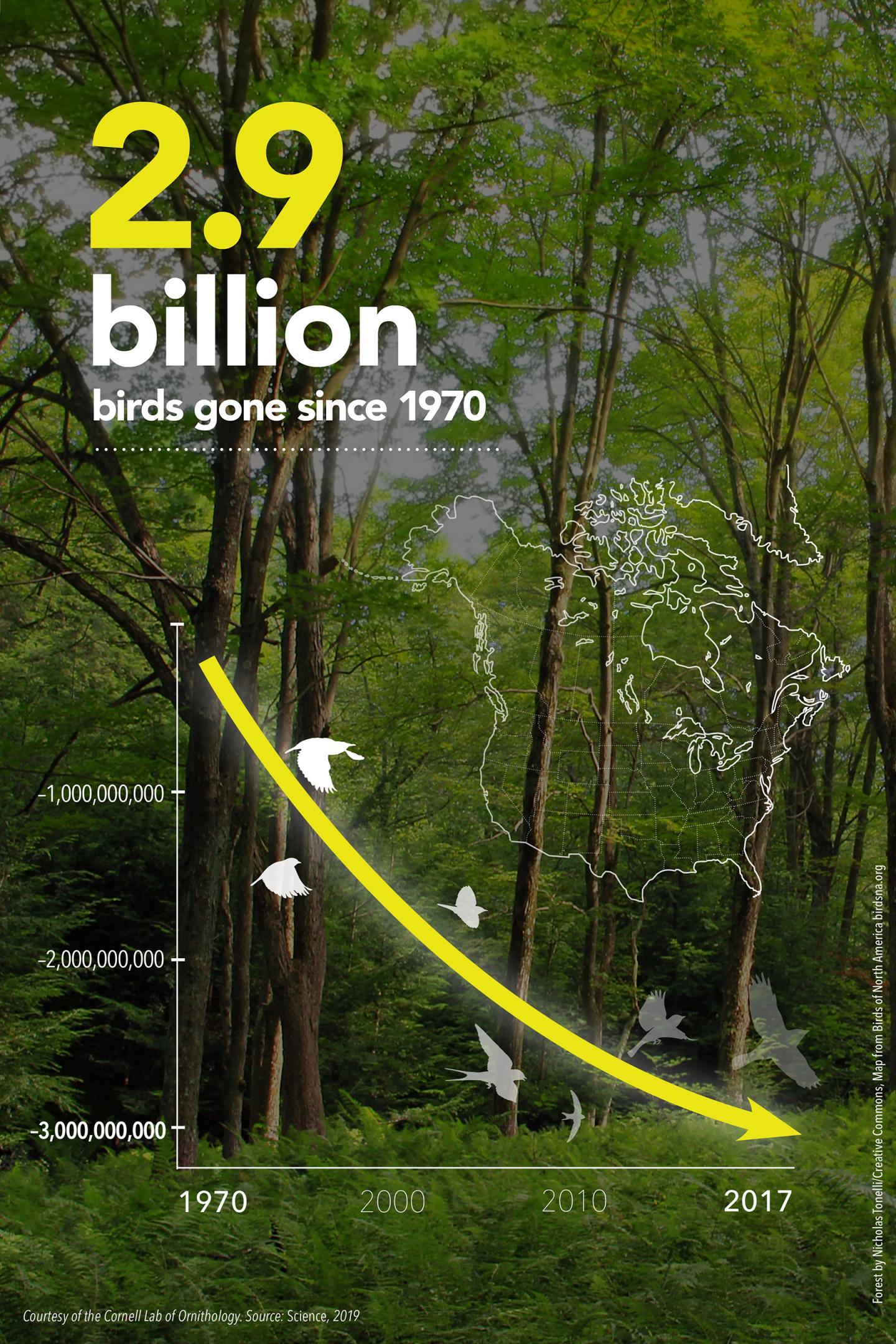 Overall Bird Declines