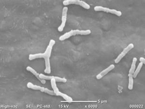 Beneficial Bacterium