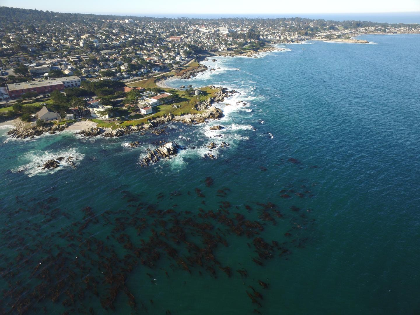 Aerial view of kelp forest canopy in Monterey Bay