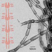 Transmission Electron Microscope Image of Carbon Nanopot Fiber