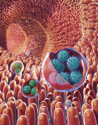 Membrane-Bound Vesicles