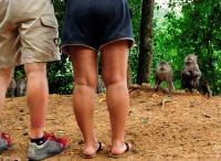 Asian Monkeys Looking for Handout