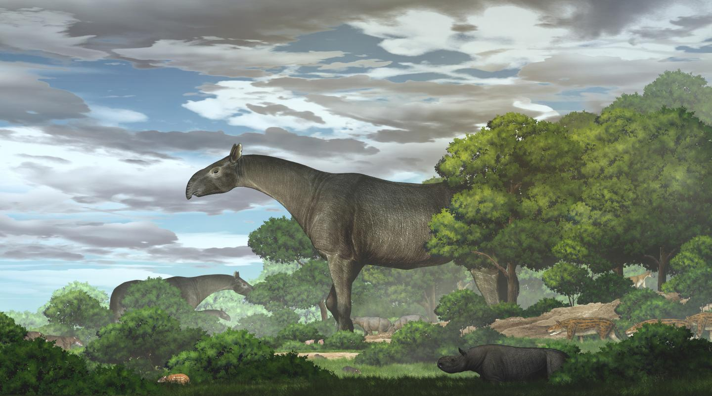 Ecological reconstruction of giant rhinos and their accompanying fauna in the Linxia Basin during the Oligocene