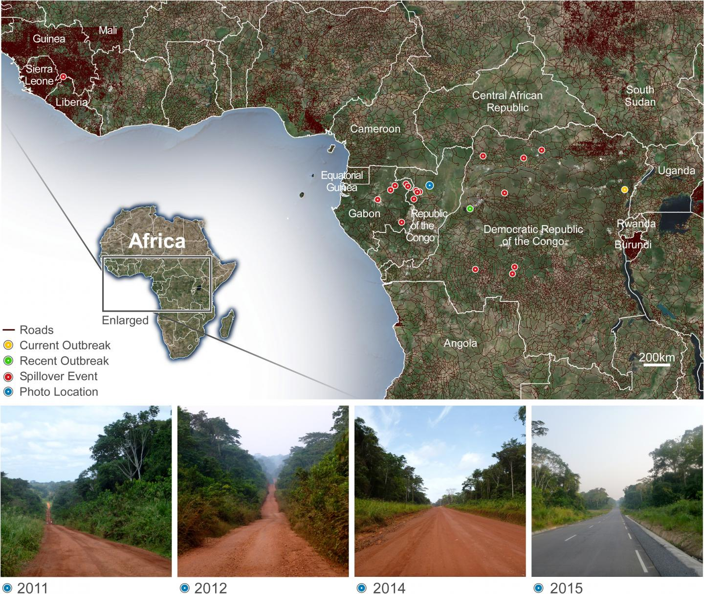 Map Illustrating Areas of Primary Human Infections of Zaire Ebolavirus and the Density of Roads