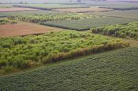 Corn, Miscanthus and Switchgrass