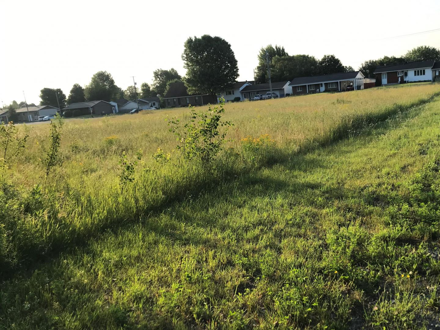 An Experimental Site Comparing the Ecological Effects of Intense Mowing with Low Impact Mowing