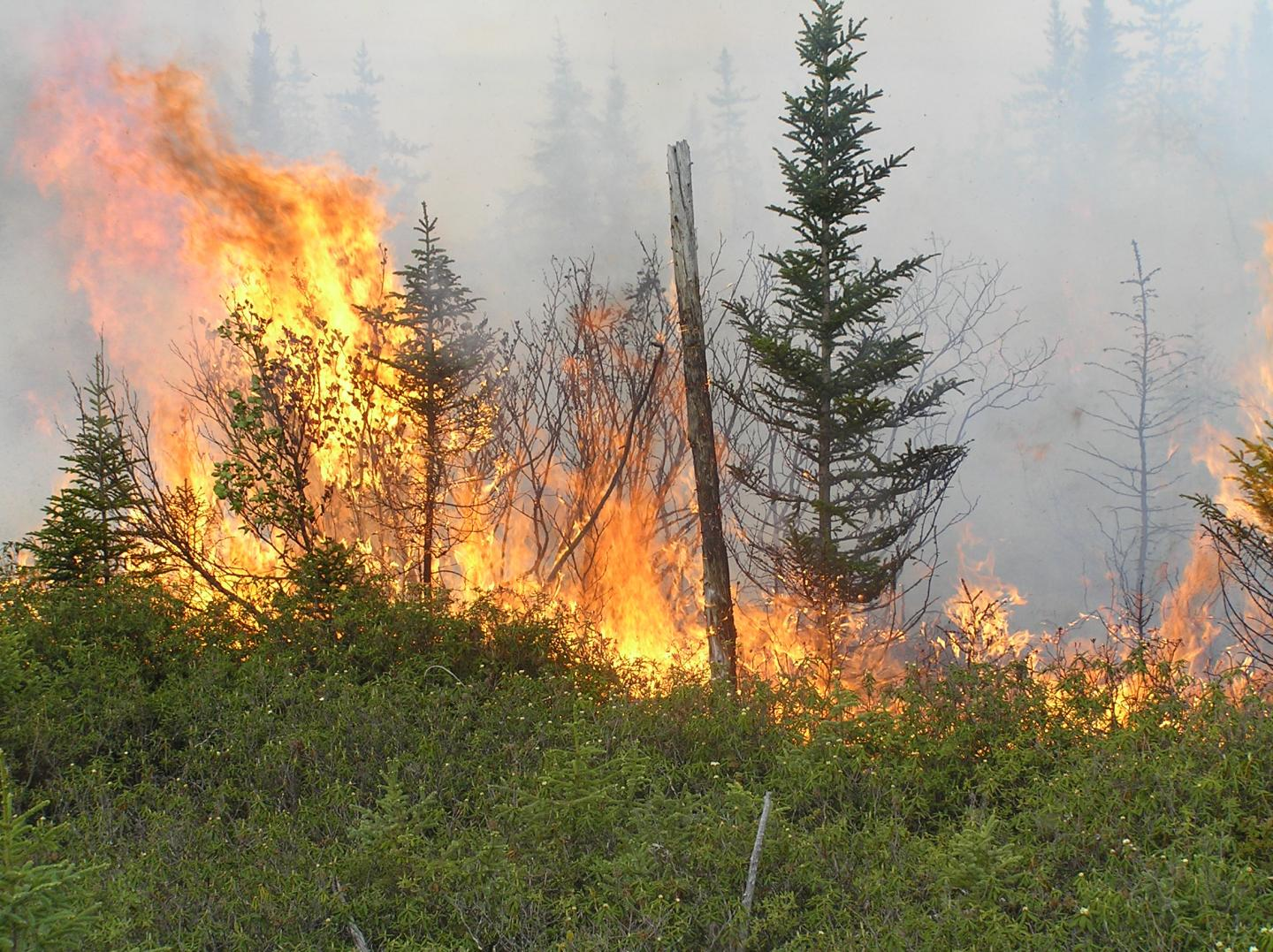 Fire Spreading across a Boreal Forest