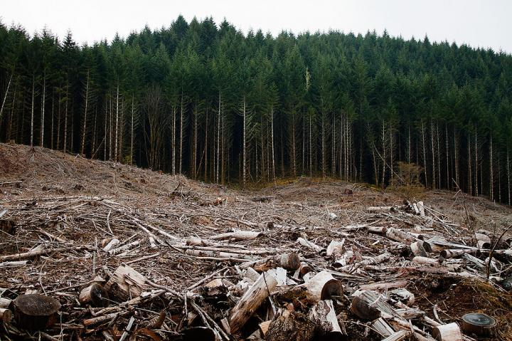 Clear-cut Forest