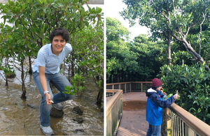 Mangrove trees at the oceanside and riverside