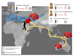 Geographic origin, blood group and dating of individuals studied