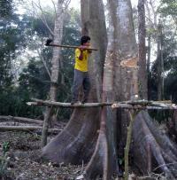 Tsimane Man Chopping a Tree