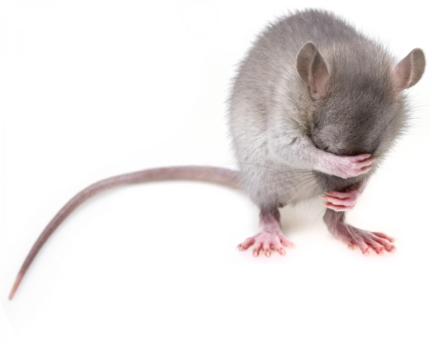 """Research papers that omit """"mice"""" from titles receive misleading media coverage"""