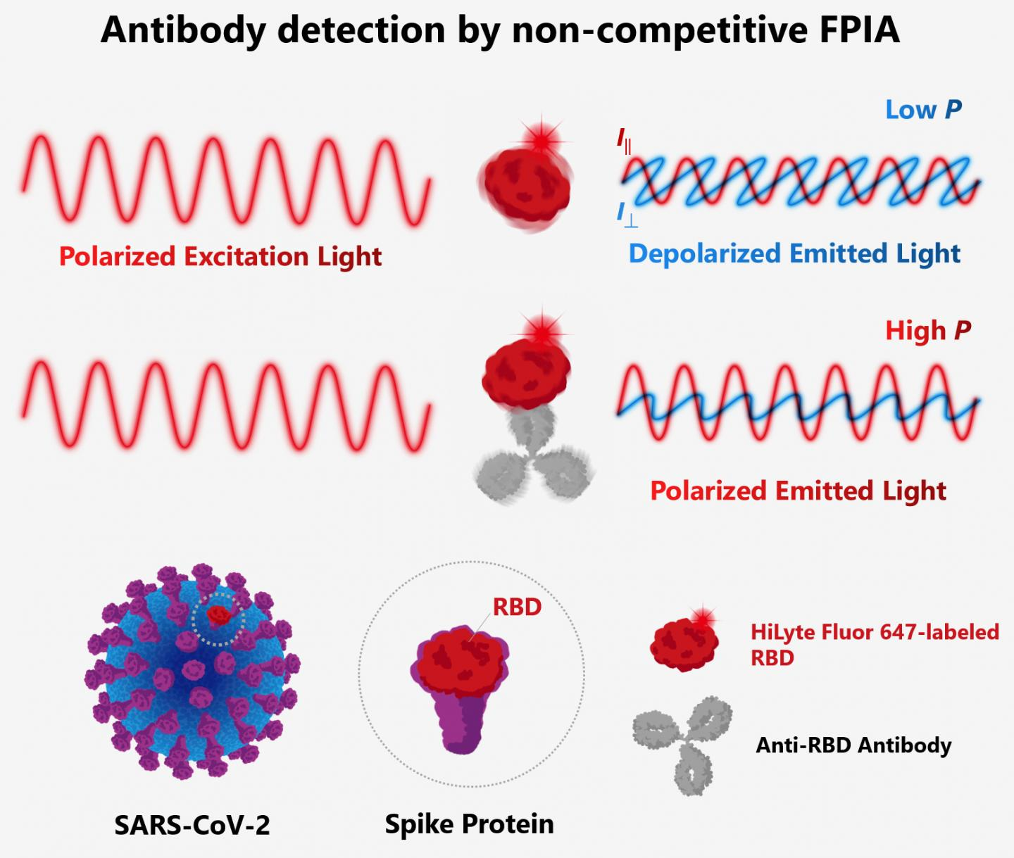 The principle behind FPIA for detection of antibodies against SARS-CoV-2