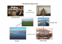 Dairy Waste Flow