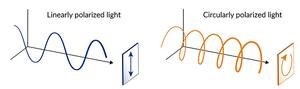 Experiments confirm a quantum material's unique response to circularly polarized laser light - EurekAlert