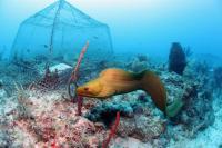 Moray Eel Danger