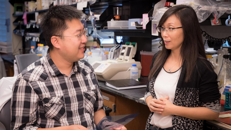 Gladstone Scientists Li Gan and Chao Wang