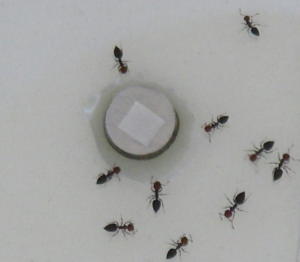 Test ants for volatile repllence