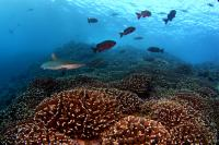 Southern Line Island Reef