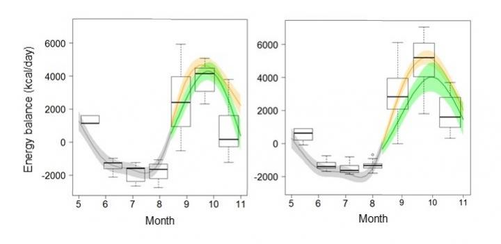Seasonal Change in Energy Balance (Kcal/day) (Left: Male, Right: Female)