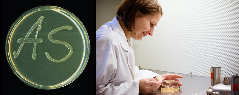 Cultivating <i>Escherichia coli</i> Bacteria