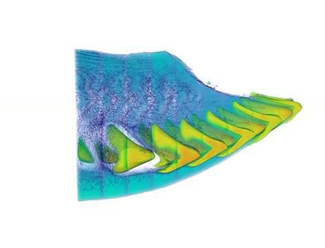 3-D Parrotfish Beak